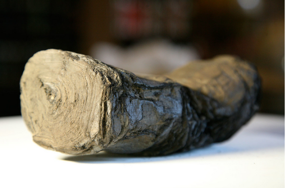 This 3000-year-old scroll survived Vesuvius's eruption Brent Seales/Lexington Herald-Leader/MCT via Getty
